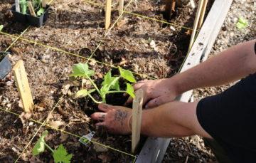 Men's Gardening Project